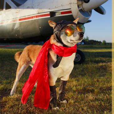 #SuperHéroes19 es pet friendly